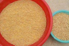 Dry soy beans peeled machine / soybean split machine