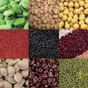 Broad bean / mung bean / lentil / dal bean dehulling machine